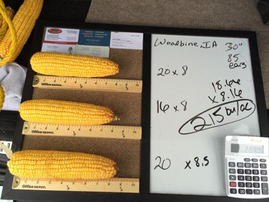This is how we do it. A photo of the process of figuring potential yield during one stop of the crop tour. (DTN photo by Pamela Smith)
