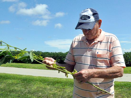 Indiana farmer and crop tour scout Joe Wise counts pods on a soybean plant Wednesday afternoon in eastern Iowa. (DTN photo by Chris Clayton)