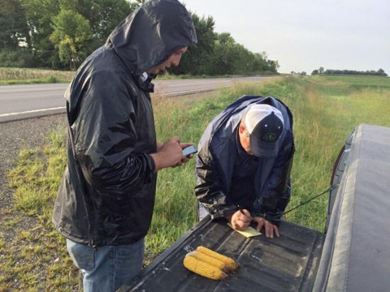 Crop tour scouts Tony Mellenthin (left) and Kurt Line measure corn samples on a soggy Thursday morning in southwestern Minnesota. (DTN photo by Pam Smith)