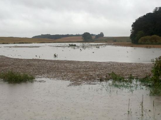 Heavy rains fell in southern Minnesota, southern Wisconsin and northern Iowa Wednesday night into Thursday morning, leaving water standing in fields in many locations. (Photo courtesy of Jerry Demmer, Clarks Grove, Minnesota)