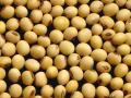 There is room for soybean prices to respond to the latest news about trade with China. USDA's ending stocks estimate suggests soybeans are currently trading about 50 cents per bushel below where they should. (DTN file photo)