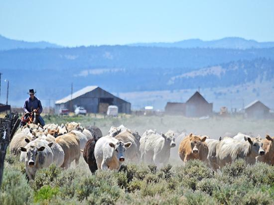 At California's Bar One Cattle Co., land stewardship and principled cattle-production practices go hand in hand. (Progressive Farmer photo courtesy of NCBA/Baxter Communications)