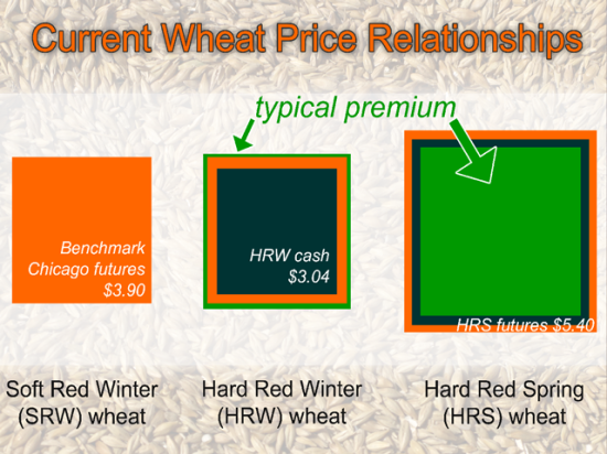 Currently, HRW wheat is underpriced, especially in its cash bids, when compared to its typical relationship with the benchmark Chicago futures contract. Meanwhile, HRS wheat looks overpriced if one considers only the mathematically typical price relationship. (Illustration by Elaine Kub)