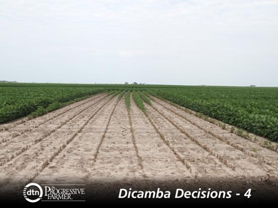 Not properly cleaning a sprayer out after using dicamba can have serious consequences for non-dicamba-tolerant crops, as a Monsanto test plot shows above. (DTN photo by Pamela Smith)