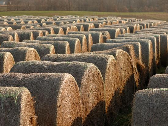 Many livestock producers are in need of hay and other materials following the flooding and blizzards in Nebraska. (DTN file photo)