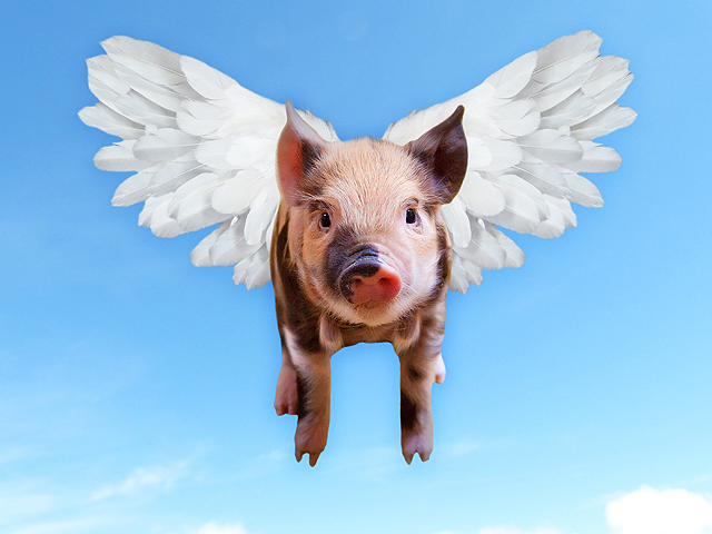 A flying pig: an example of fake agriculture news. (Public domain image)