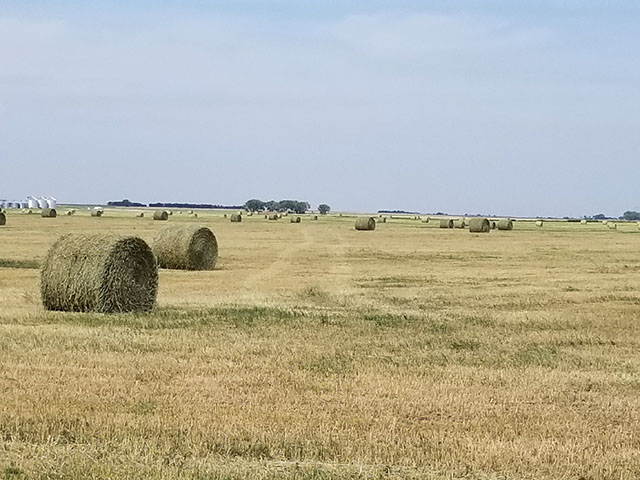 Scouts on the annual Hard Spring Wheat and Durum Tour will likely find many drought-stricken wheat fields already cut and baled, such as this one near Gettysburg, South Dakota. (Photo courtesy of Tim Luken)