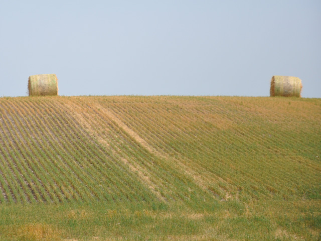 Scouts on the western routes of the tour's first day saw plenty of baled wheat fields, like this one in South Dakota, thanks to extreme drought conditions in the western Dakotas. (DTN photo by Chris Clayton)