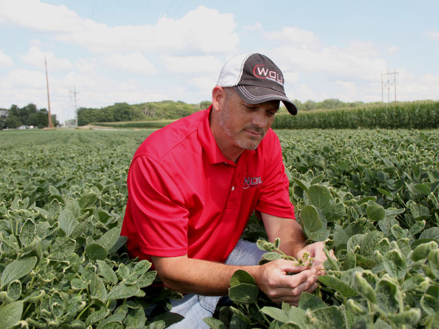 Answers to why dicamba moved this year are necessary as growers try to decide what to plant for 2018. East-central Illinois farmer Jeremy Wolf had soybeans injured from sprays that went astray this year. (DTN photo by Pamela Smith)