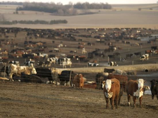 USDA released its April 1 Cattle on Feed report on Friday. (DTN/The Progressive Farmer file photo by Jim Patrico)