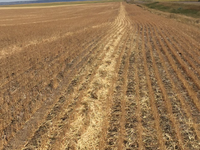 This spring wheat field near Frazer, Montana, was cut at harvest to be baled for hay because the severe drought this summer rendered it nearly useless. (Photo courtesy of Todd LaPlant, elevator manager at EGT LLC, Glasgow, Montana)