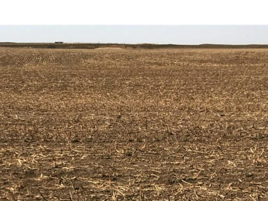 Less than one-tenth of an inch precipitation since Oct. 1, 2017, has winter wheat fields in the Oklahoma Panhandle looking barren. (Courtesy photo by Monica Mattox, Oklahoma Assistant State Climatologist)