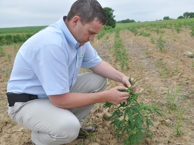 Kentucky Celebrates Hemp Heritage As Other States And Federal Laws