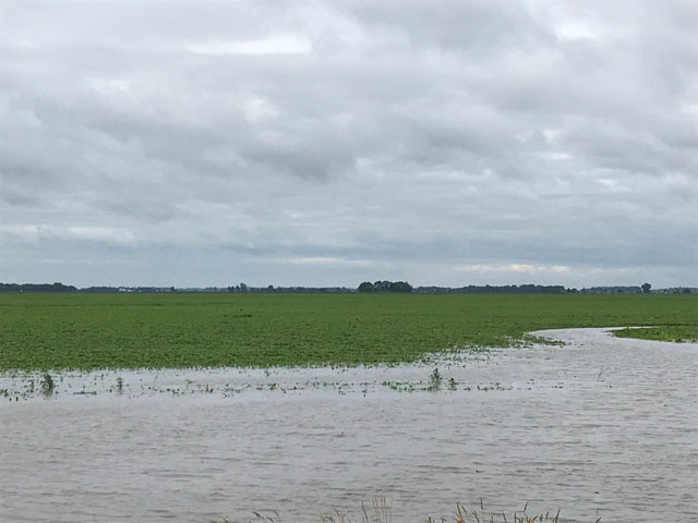 Soybeans sitting in a flooded field west of I29 at Spink, SD. (Photo by Brett Scholting, Dakota Dunes, South Dakota)