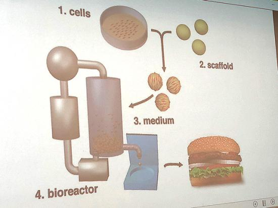 A slide shown at a Food and Drug Administration hearing Thursday explains how cell-cultured proteins are produced. (DTN photo by Chris Clayton)