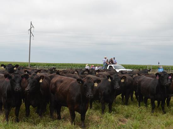 Nebraska's Bruning Farms hosted some of the best seedstock producers from across the country, as Allflex announced the commercial release of its new ear tag monitoring system. (DTN/Progressive Farmer photo by Victoria G. Myers)