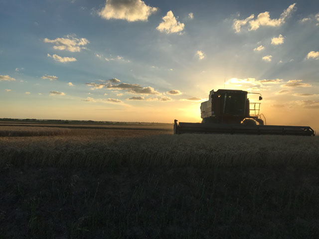 Pictured is winter wheat harvest at sunset in Sumner County near Clearwater, Kansas, on June 17. (Photo by Lindsay Van Allen, Clearwater, Kansas)
