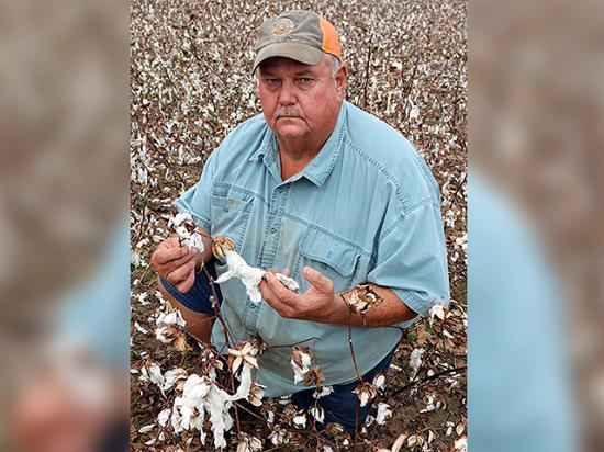 Alabama farmer Fred Helms stands in a field of damaged cotton following Hurricane Michael. Helms expects he lost most of his crop yield to the storm. (Photo courtesy of the Alabama Farmers Federation)