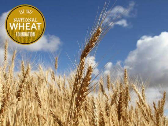 The National Wheat Contest's fourth year of competition is open for applicants. (DTN photo graphic)