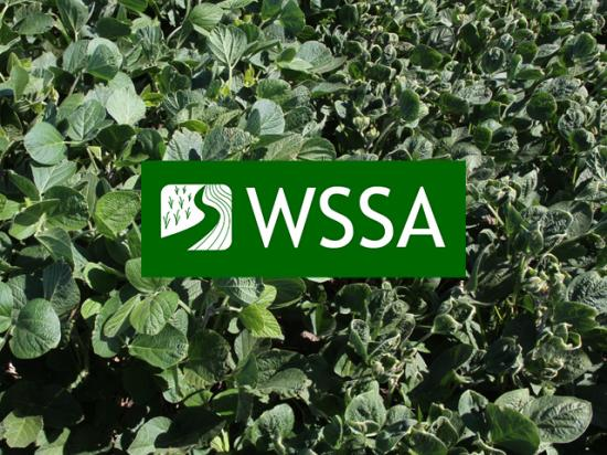 Scientists have identified key risk factors contributing to dicamba volatility and widespread off-target injury for the past two years. (DTN photo by Pamela Smith)