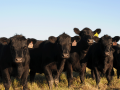 Efficacy rates for traditional dewormer programs are a growing challenge. There are solutions.  (DTN/Progressive Farmer photo by Becky Mills)