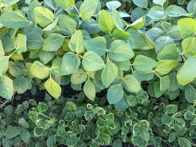 Dicamba Injury Reports Begin as States Continue to Alter