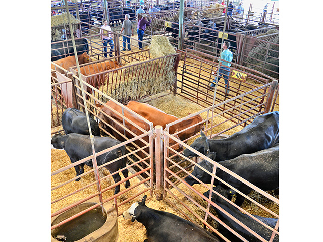These simple steps will help increase feeder calf prices