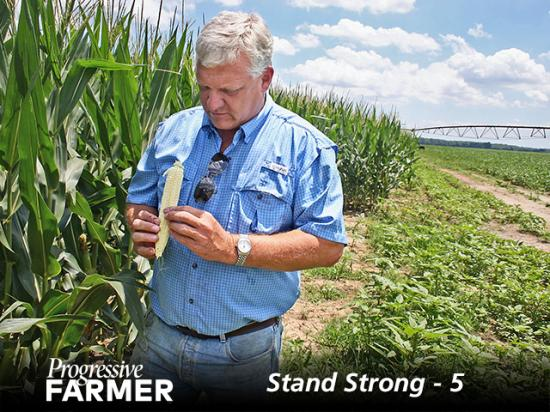 Perry Galloway, of Gregory, Arkansas, counts ear rows and kernels. (DTN/Progressive Farmer photo by David Bennett)