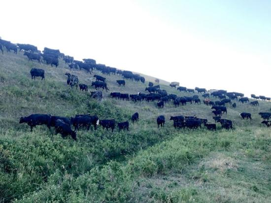 Different seasons within the cattle industry bring their own sense of beginning and ending. (DTN photo by ShayLe Stewart)