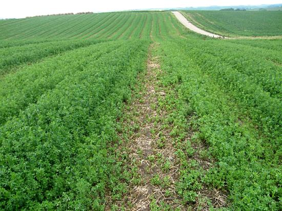 Alfalfa winterkill seems to be an issue this spring throughout Wisconsin and stretching into surrounding states such as northern Illinois and eastern Minnesota. (DTN file photo)