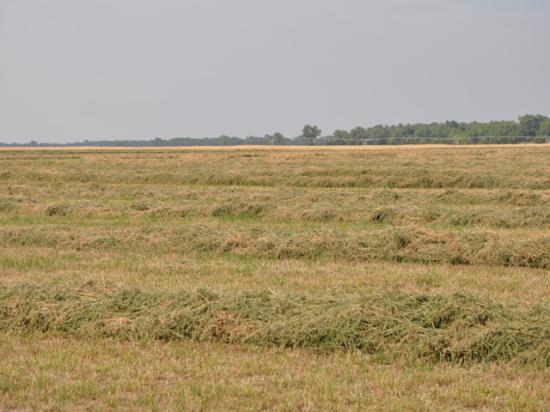 Forage crops in most of the Midwest are not having a normal growing season thanks to a cool, wet first half of the growing season. (DTN photo by Katie Dehlinger)