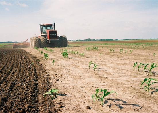 A farmer tears up a cornfield for replant. The demand for replant corn seed is nearing record highs this spring, seed companies said. (DTN file photo)