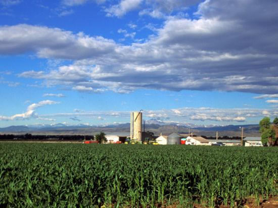 Bankers say they've been proactive in helping farmers head off financial problems early. (DTN file photo)