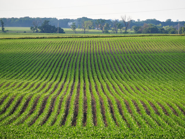 For 2017, Iowa average cash rents declined 4.8%, or $11 per acre. (DTN/The Progressive Farmer file photo)