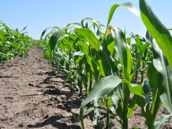 Do you know how many plants are surviving from your seeding rate? A 95% stand count is achievable, Purdue University researchers say. (DTN photo by Bryce Anderson)