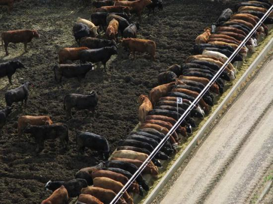 Livestock producers now have until Jan. 22, 2018, before an emissions reporting rule takes effect. (DTN file photo)