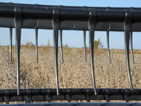 If your harvest view looks like this, your combine is poised to turn into a weed-seed-spreading machine. Here are some tips on avoiding that. (DTN file photo by Pamela Smith)