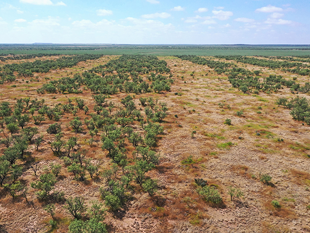 Grubbing invasive trees is effective long term when sprayed areas can see regrowth. (Progressive Farmer image by Joel Reichenberger)