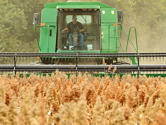 Profit potential is promising for grain sorghum in 2020 compared to other crops. (Progressive Farmer image by Jim Patrico)