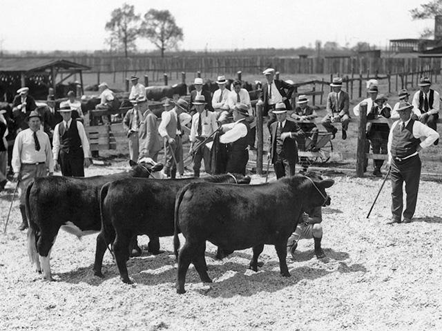 (Progressive Farmer image by Foltz Studio, Savannah Livestock Fat Show, April 1934)