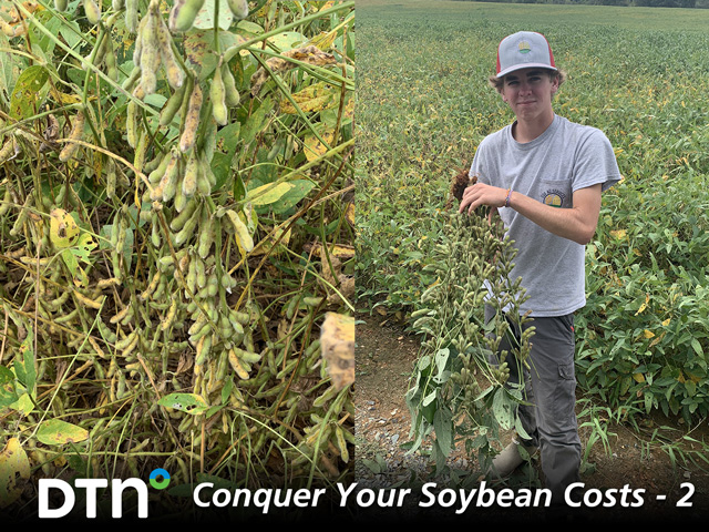 North Carolina farmer Will Cox sees big differences in the architecture of soybean varieties he tests, as well as how those varieties respond to inputs. (Progressive Farmer photos by Bodie Kitchel)