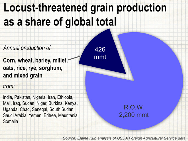 Although the 2020 upsurge of desert locusts won't destroy 100% of the crops in all the countries projected to be affected, these widespread countries produce a significant share of global grain. (Graphic by Elaine Kub)