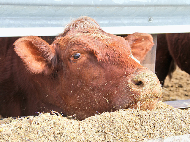 The price outlook for livestock was mostly positive during the USDA's annual outlook. The forecast highlights higher cattle and hog prices for 2021. (DTN/Progressive Farmer photo by Pamela Smith)