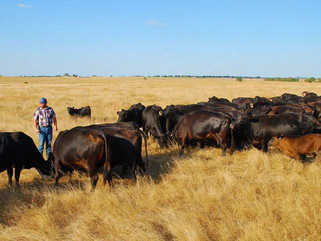 Culling decisions affect more than income, they play a key role in forage conservation and overall herd quality. (Progressive Farmer photo by Zak O'Brien)