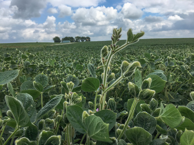 Farmers with claims of soybean yield loss from dicamba injury will be able to file for part of a $300 million settlement by Bayer in the weeks and months to come, after the settlement was finalized on Dec. 16.  (DTN photo by Pamela Smith)
