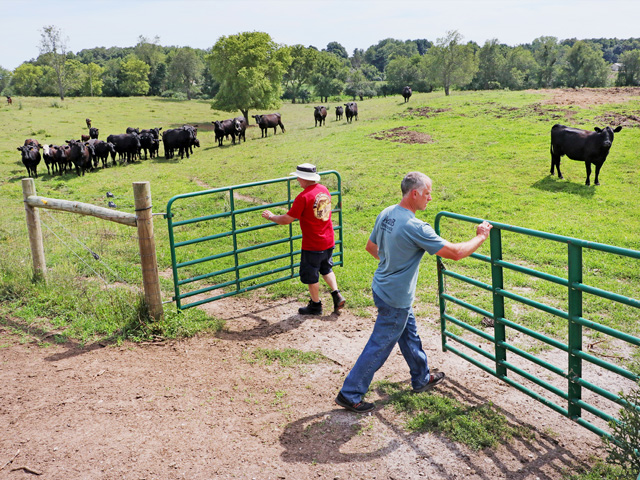 Robert Matthys (left) and Rick Matthys move cattle often as part of a grazing plan that boosted the farm's stocking rates. (PF photo by Dave Tonge)