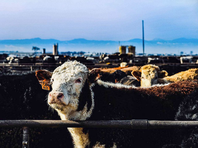 Some U.S. senators from agricultural states make the case that the report on cattle markets released Wednesday shows a need for action by Congress.  (DTN file photo by Mandi Cottrell)