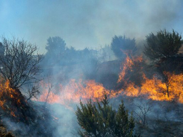 Wildfires in 11 Western states have burned over 6.9 million acres so far. That includes more than 3 million acres and 4,200 buildings in California. The American Farm Bureau Federation is calling on Congress to pass legislation that would help mitigate wildfires. (DTN file photo)