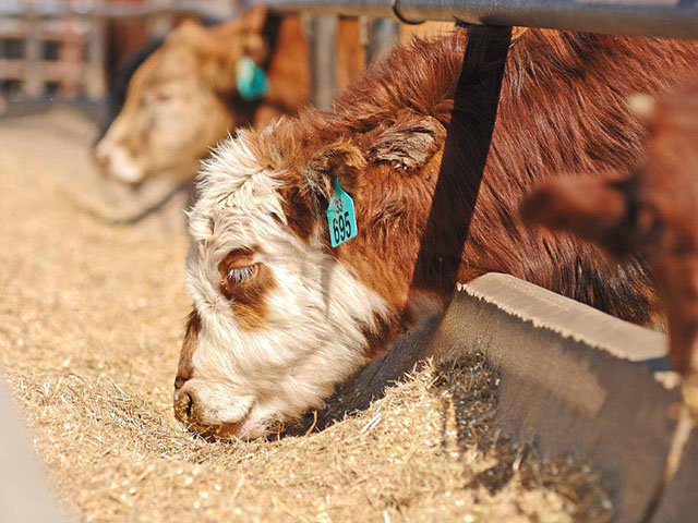 Calf-raisers will soon have a new tool to help them promote and improve health and husbandry practices. (DTN/Progressive Farmer file photo by Jim Patrico)