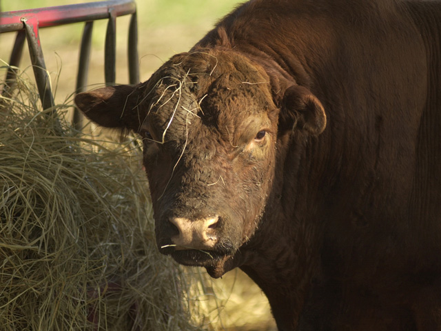 Most of the U.S. includes areas the IRS has designated as applicable for tax relief following gains on sales of certain types of livestock.  (Progressive Farmer photo by Jim Patrico)